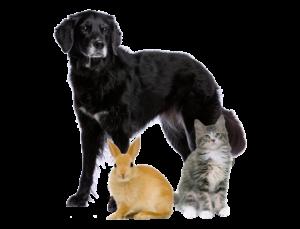 Hund-kanin-katt